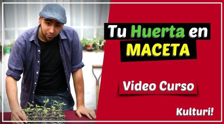 Curso online de huerta en maceta